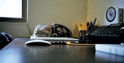 Cat sleeps on laptop.