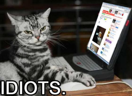 Cat says idiots.
