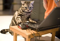 Cat works on computer.