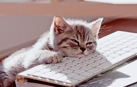 Cat with chin on keyboard.