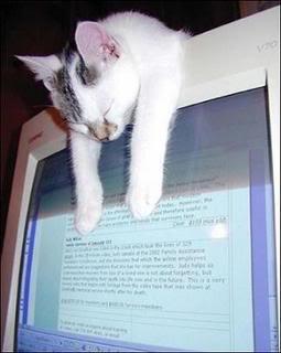 Cat slumps over computer monitor.