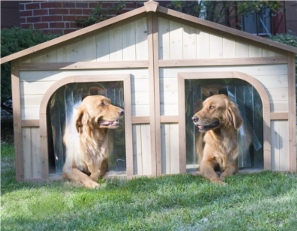 Dogs talking real estate