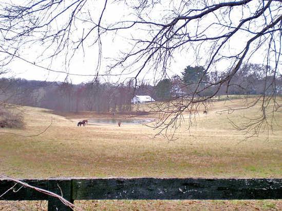 Potomac, MD horse farm